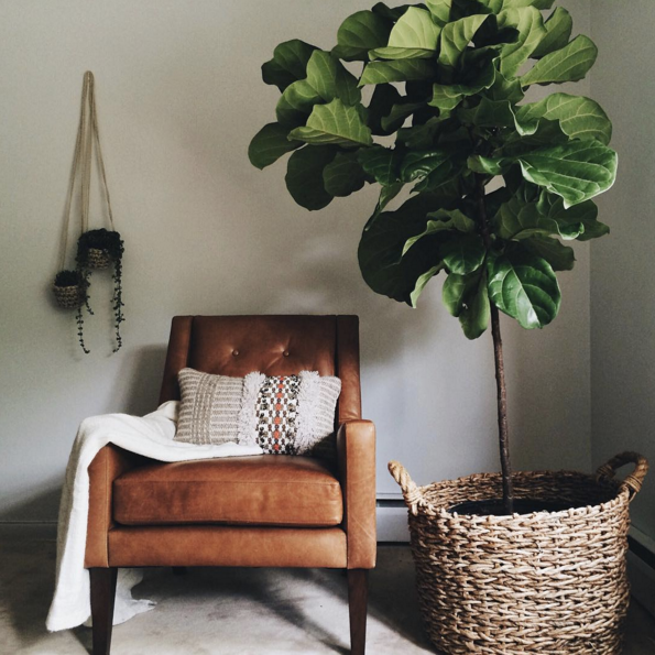 everything-you-need-to-know-about-the-fiddle-leaf-fig-green-living-room-56a93a90cc657e184583bf83-w1000_h1000