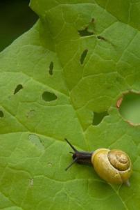 Slugs/Snails
